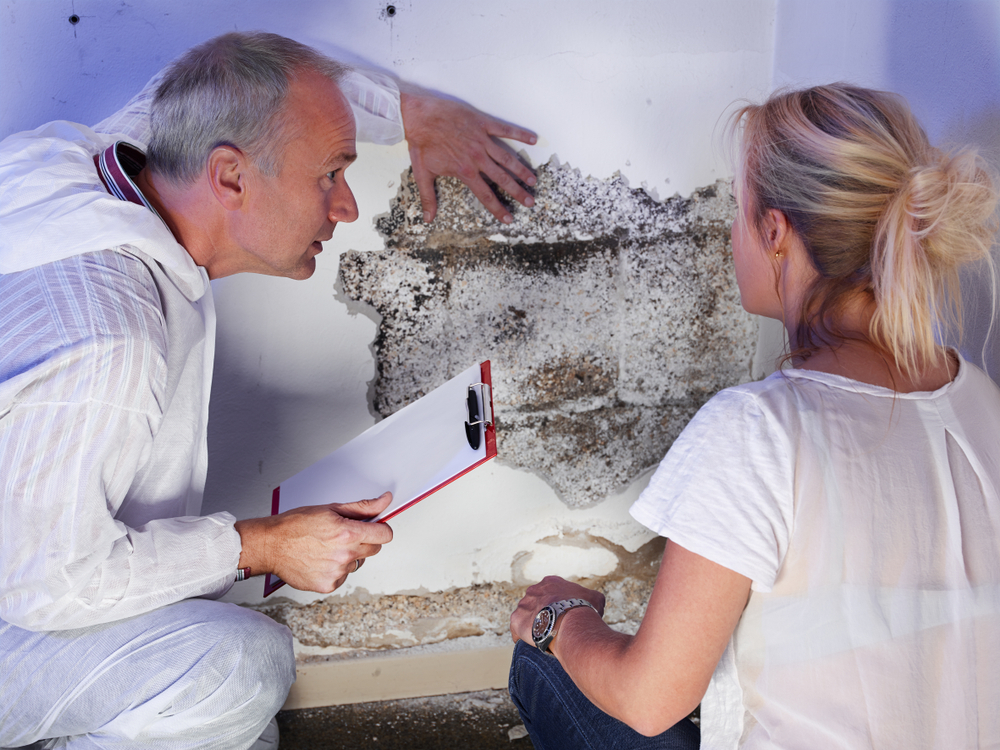 Pure Maintenance Free Mold Inspection Omaha Ne