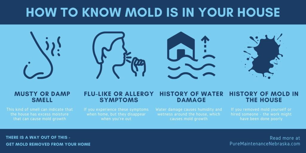 How to Know if Mold Is In Your Home Infographic